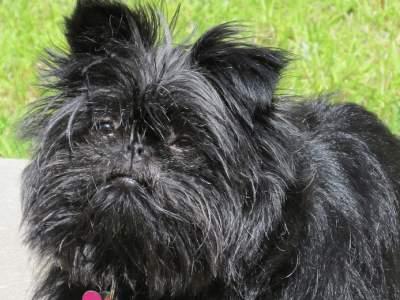Honden Rashonden Rasbeschrijvingen Karakter Rashond